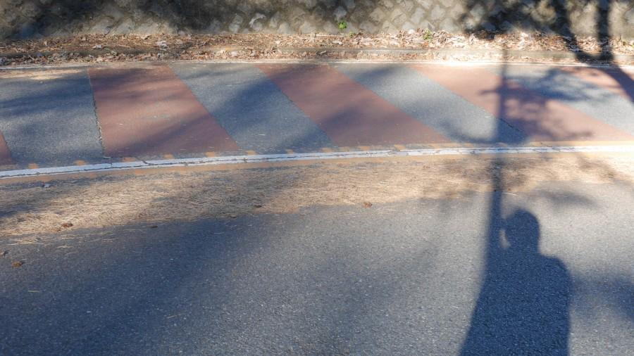 センターラインと道路脇には、落ち葉が固まっています。
